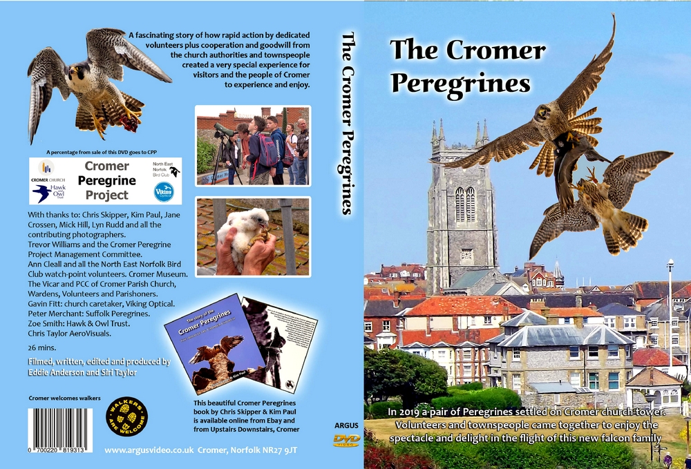 The Cromer Peregrines